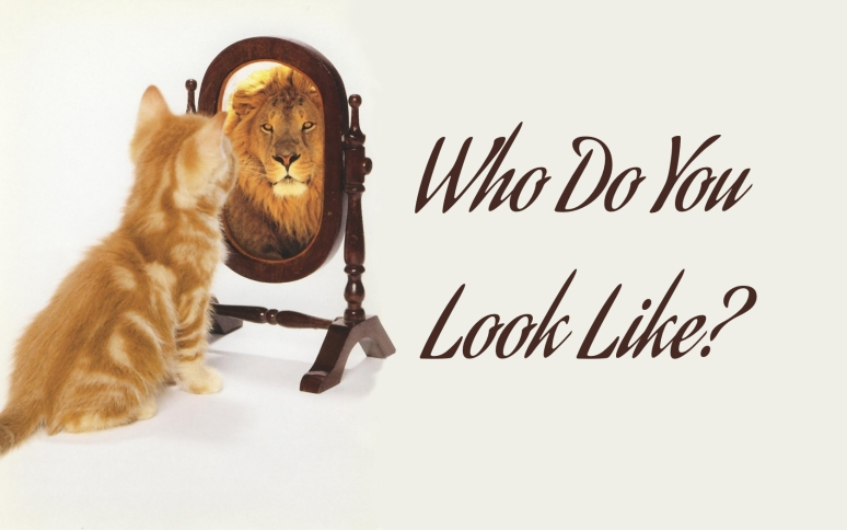 cat lion.001